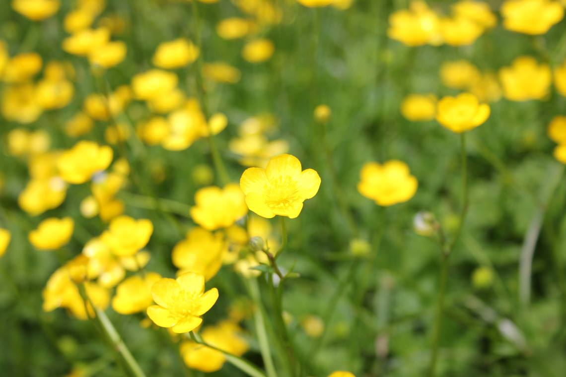 Wildflowers Of The Blue Ridge Parkway