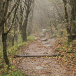 Because of the high elevations, the trail is often thick with fog.