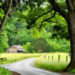 Cades Cove Backroad in Spring