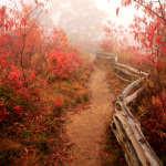 Foggy Autumn Trail