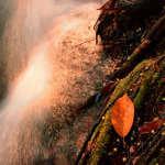Moss, Leaf, & Falls
