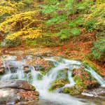 Roaring Fork Creek Cascades