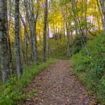 The trail opens up into a flat and gentle path through a shaded section of woods.