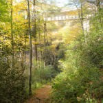 About 0.7 miles in, the Sims Creek Viaduct starts to show through the trees.
